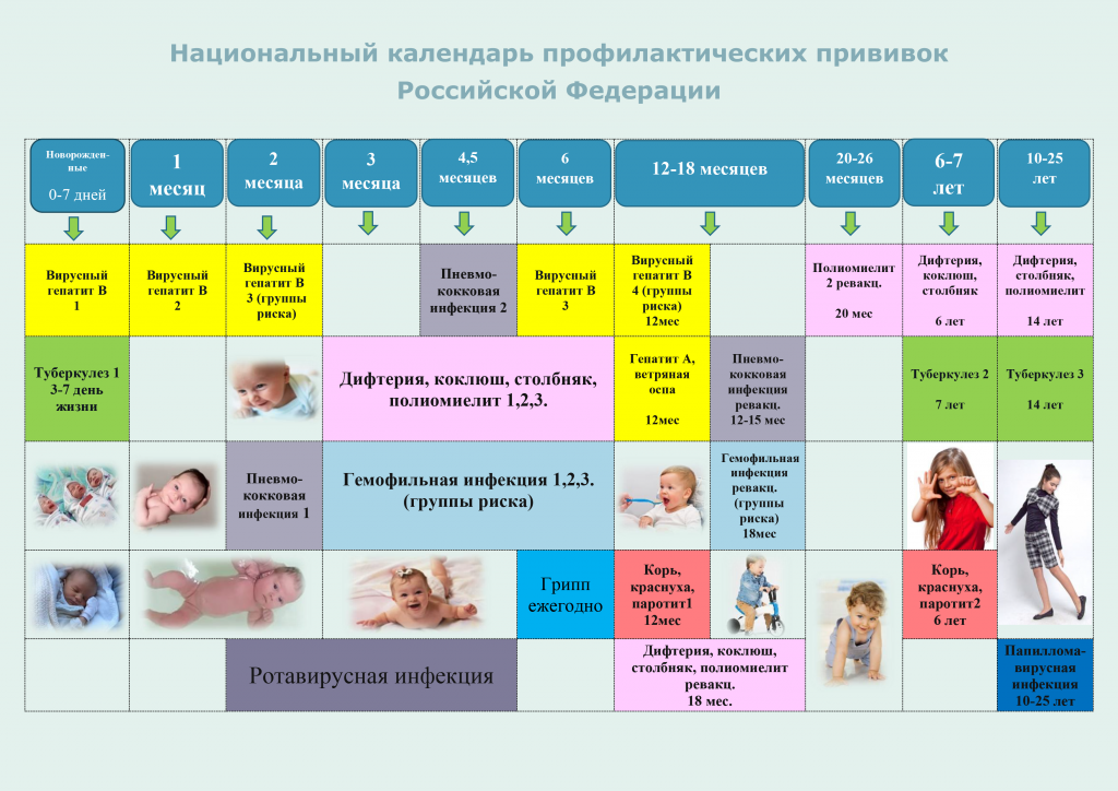 natsionalnij_kalendar_profilakticheskih_privivok_rossijskoj_federatsii.png
